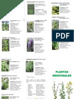 Tríptico Plantas Medicinales 3o