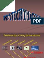 Protochordates Ppt Short Cut Summer 2014
