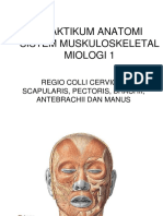 Praktikum Miologi 1