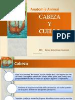 3 Cabeza AA 2013-II