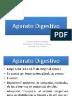 19° Aparato Digestivo