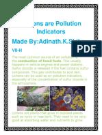 Lichens Are Pollution Indicators