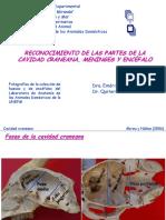 cavidadcraneanayencefalo-121009162132-phpapp01