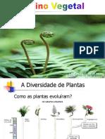 Plantae 01