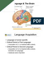 Language and Brain