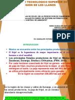 PRODUCCION DE CHAMPINON BLANCO ( Agaricus bisporus)UTILIZANDO UN SISTEMA AUTOMATICO DE CONTROL DE AMBIENTE
