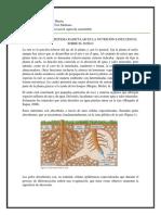 Importancia Del Sistema Radicular en La Nutrición