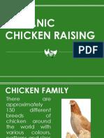 Organic Chicken Raising.pptx