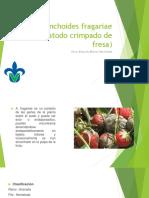 Aphelenchoides fragariae