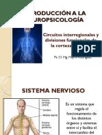 Circuitos interregionales y divisiones funcionales de la CC.pptx
