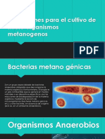 2.5- Bacterias Metanogénicas
