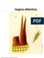 geheeb_bryologica_atlantica
