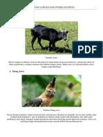 58 Gambar Hewan Punah Dan Penjelasannya HD