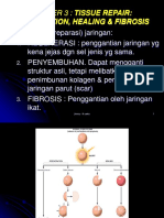Regeneration & Fibrosis-b