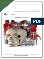 Manual de Anatomia Basica