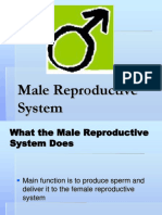 Male Reproductive System-1