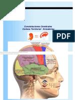 Nueva Medicina Constelaciones Cerebrales Corteza Territorial