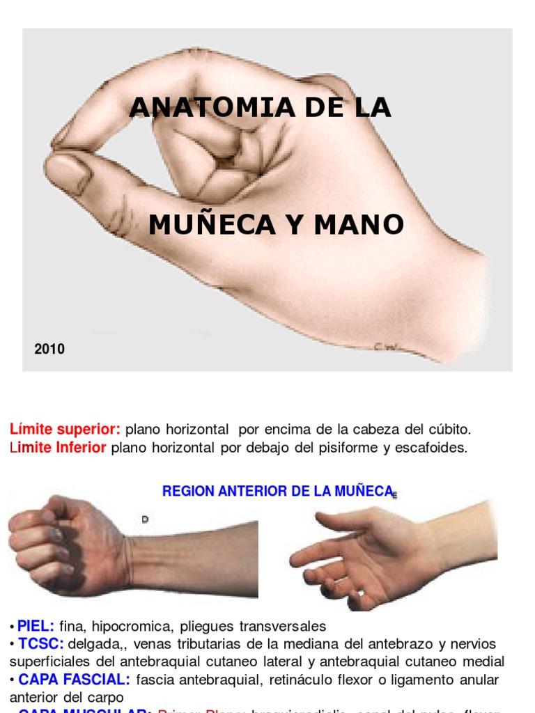 Asombroso Anatomía De Una Muñeca Inspiración - Anatomía de Las ...