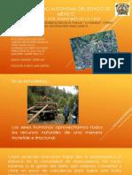 Deforestación en EL PARAJE (1)
