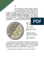 Lipoproteínas y Demás