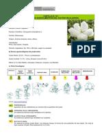 Condiciones Agroclimaticas Algodon 0