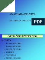 4.-Anatomy