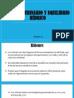 Aparato Urinario y Equilibrio Hídrico.pptx