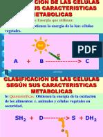 Metabolismo Vegetal