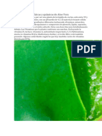 Propiedades Físico Quimicas Composición Penca Sabila y El Aloe