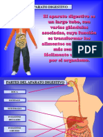 7. Sistema Digestivo Informacion