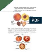Frutos Carnosos y Complejos