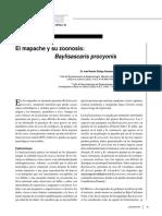 Baylisascariasis 2 (Parasito Del Mapache)