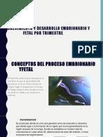 Crecimiento y Desarrollo Embrionario y Fetal Por Trimestre 1 2 (1)