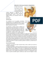 Histologia Aparato Reproductor Masculino y Femenino