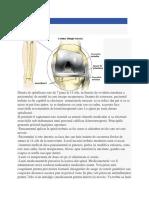 Protocol de Recuperare Dupa Artroplastia de Genunchi