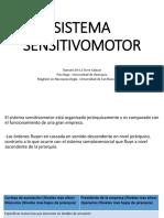 Sistema Sensitivomotor