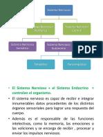 Sistema Nervioso 2013-i