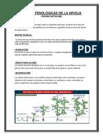 Etapas Fenológicas de La Arveja