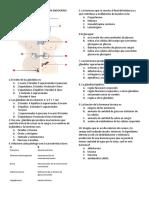 Evaluacion Recuperatoria Sistema Endocrino Octavo