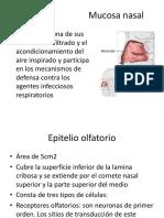 OLFATO.pptx