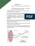 MUSCULO histologia