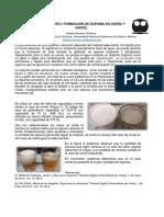 Formación de Espuma en Vidrio y Unicel.