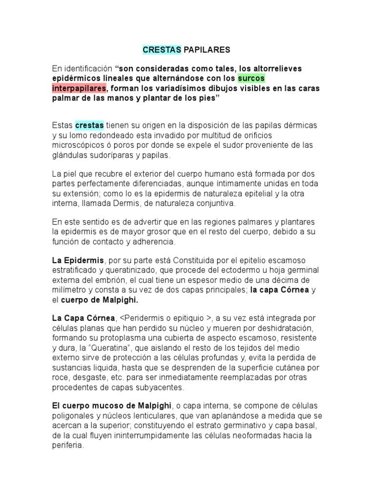 64679879-CRESTAS-PAPILARES