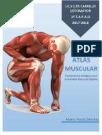 Atlas Muscular - Alvaro Huete Sánchez