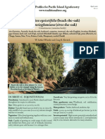 101611413-Casuarina.pdf