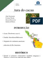 Fruticultura Cacau
