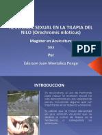 Trabajo Reversion Sexual Tilapia Nilo Ederson Montalico