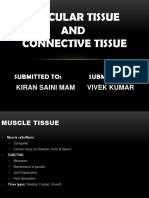 vivek ppt- Muscular tissue Connective tissue.ppt