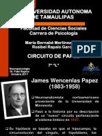 Circuito Papez