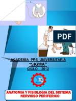 6.-Anatomia Sistema Periferico
